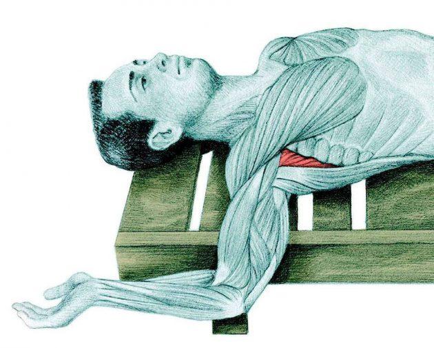 Анатомия стретчинга: растяжка плеча
