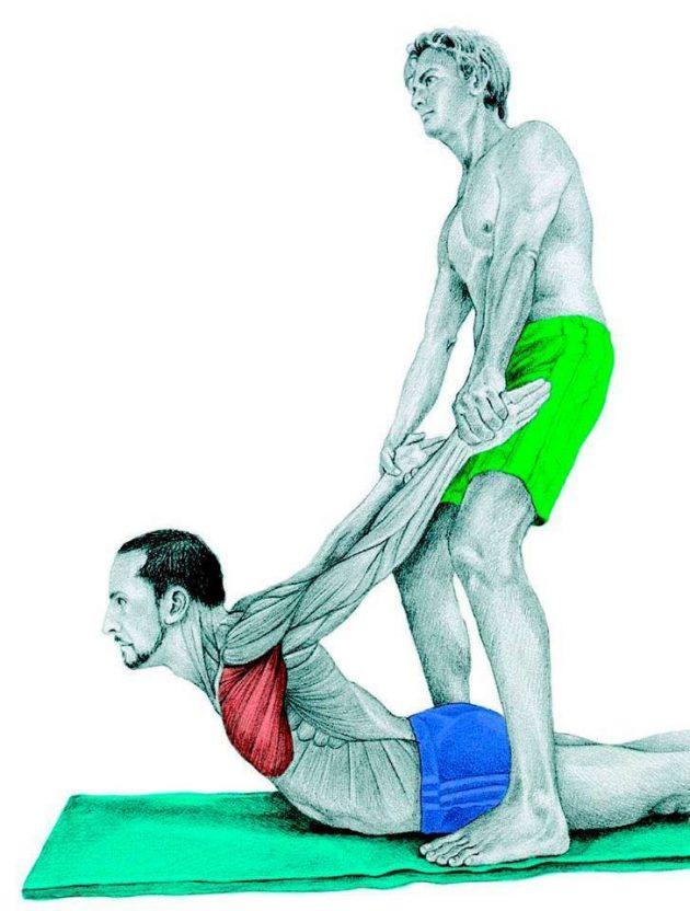 Анатомия стретчинга: растяжка грудных мышц