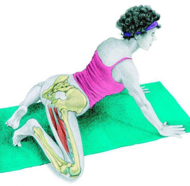 Анатомия стретчинга: «лягушка»