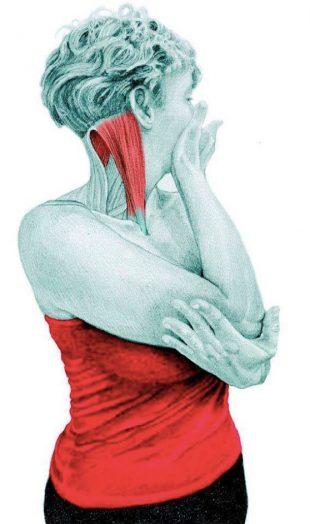 Анатомия стретчинга: растяжка вращателей шеи