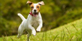 Собаки и их типичные болезни