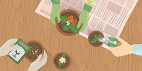 Как перестать убивать растения: пособие для гиков