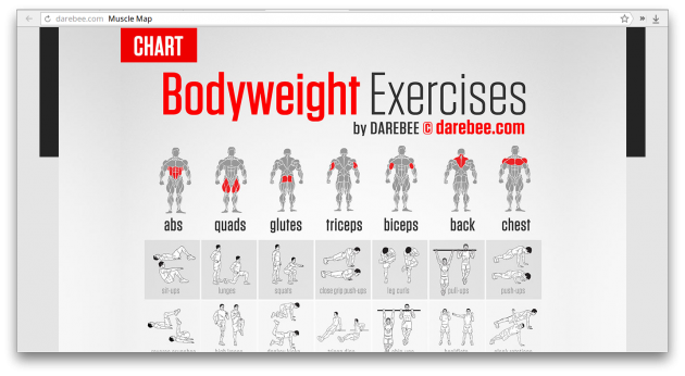 DAREBEE Muscle Map