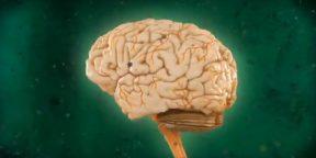 Документальный фильм «Испытайте свой мозг. Часть 1»