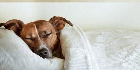 Неприятная правда о вашей кровати