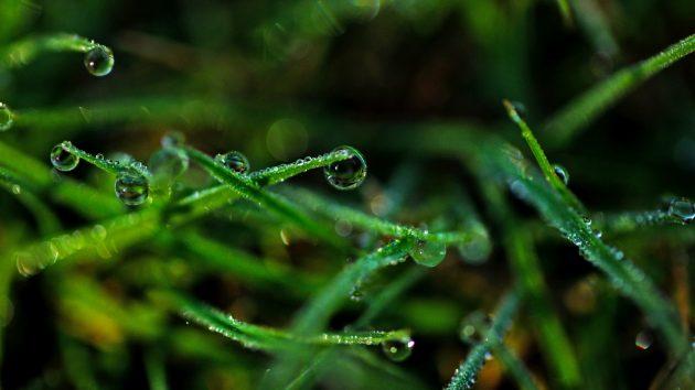 Обои: роса на траве