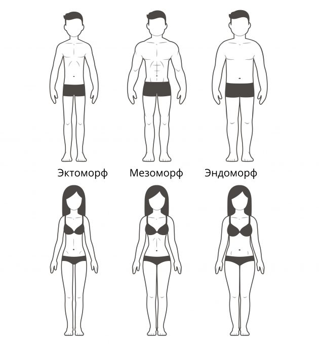типы телосложения