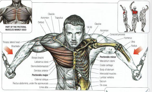 силовые тренировки: сведение рук на кроссовере