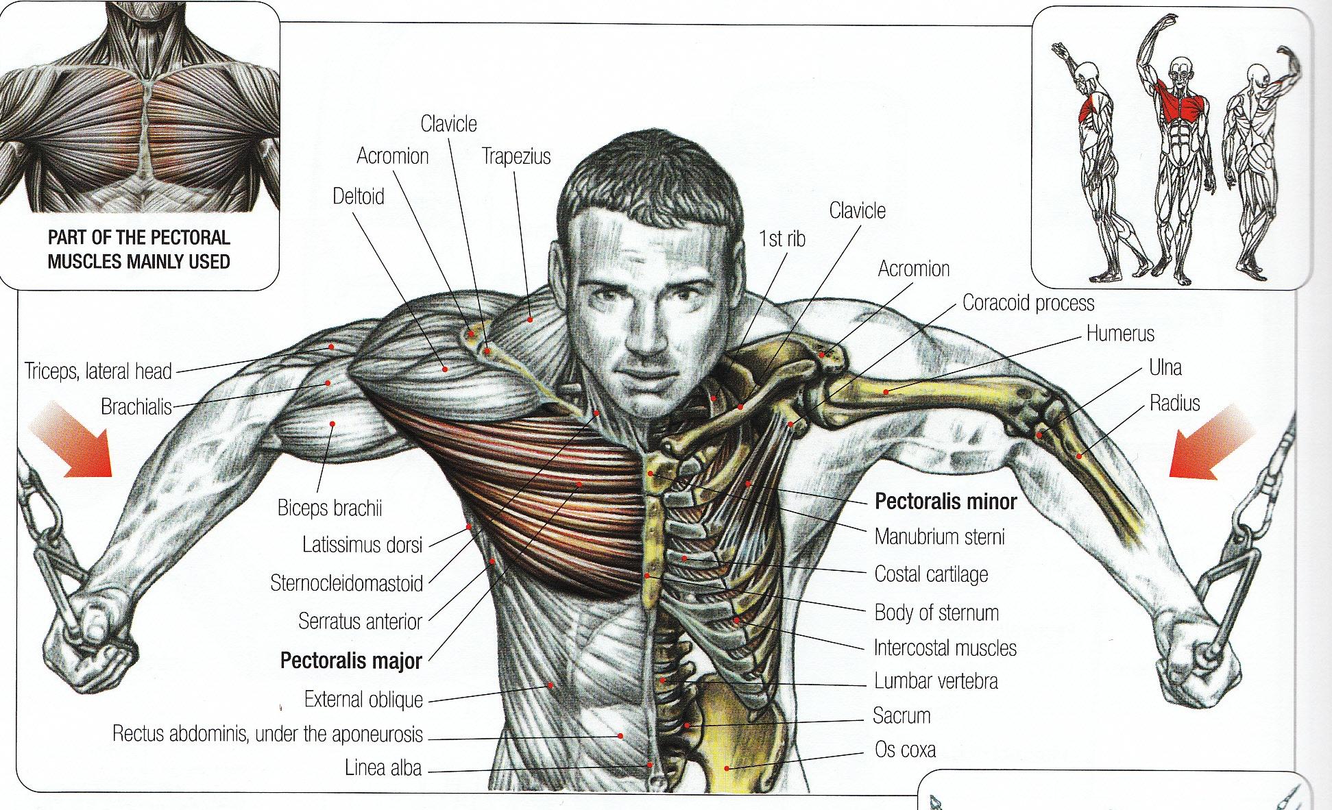 все мышцы и суставы тела болят inflamația degetului de la picior în articulație