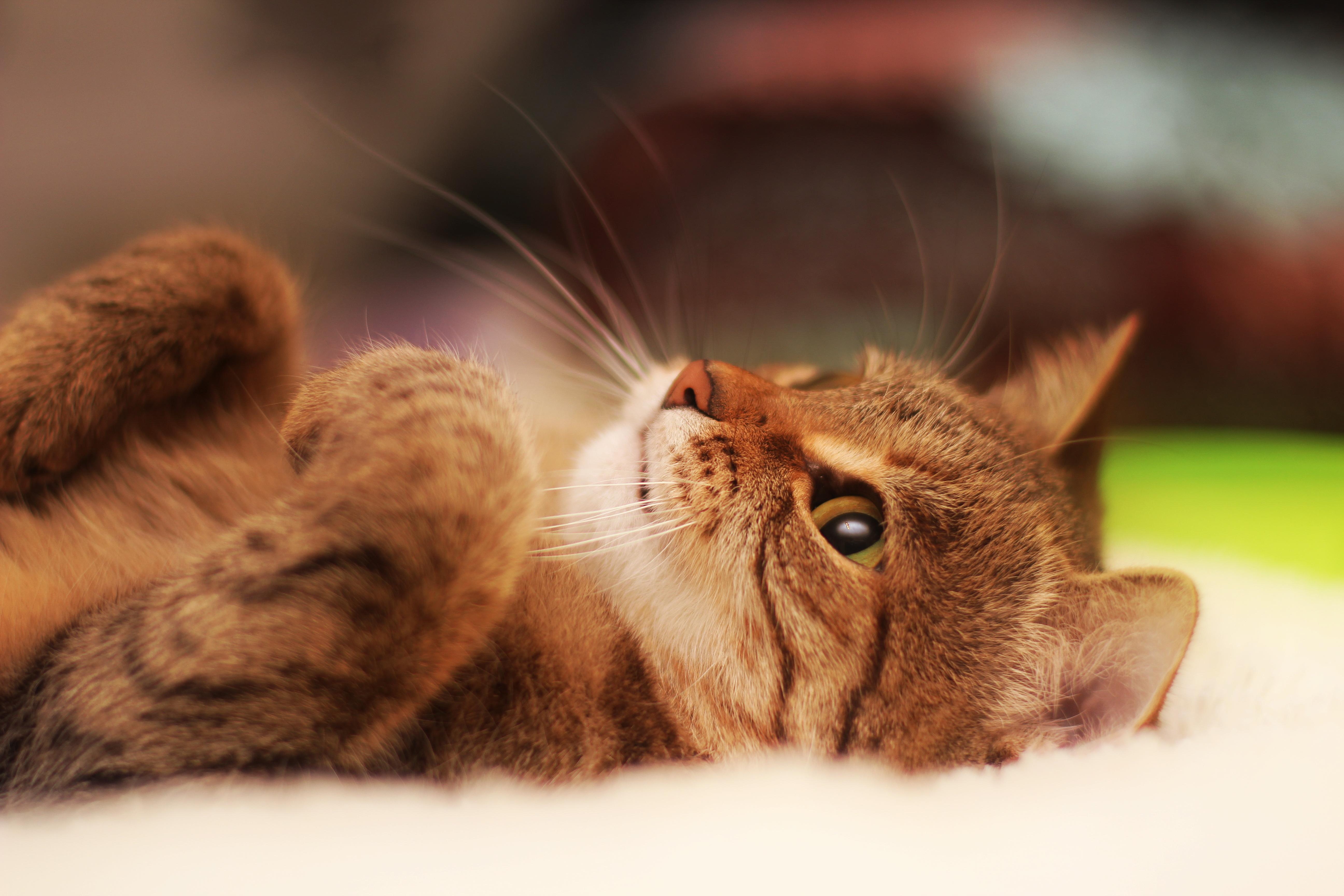 картинки на рабочий стол животные кошки смешные показавшись поле