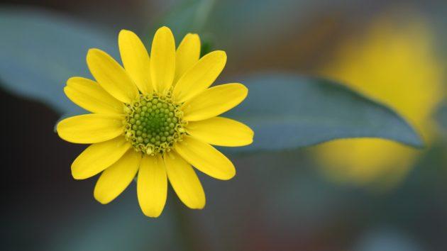 Красивые желтые цветы