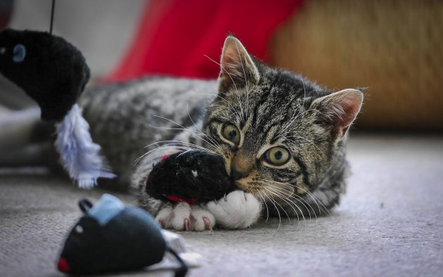 игрушки для кошек: интерактивные развлечения