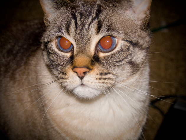 игрушки для кошек: лазерные указки