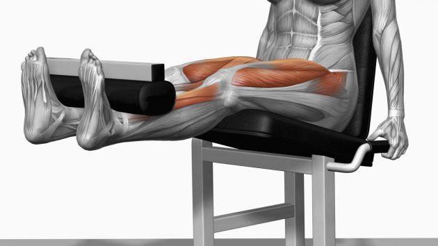 силовая тренировка: выпрямление ног