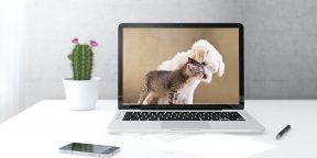 Животные для вашего рабочего стола и экрана блокировки