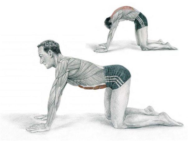 анатомия стрейчинга