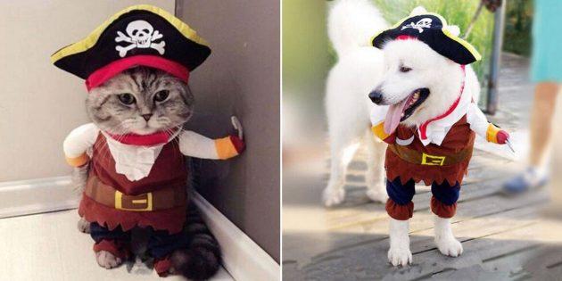 Новогодние костюмы для собак и кошек: пушистый пират