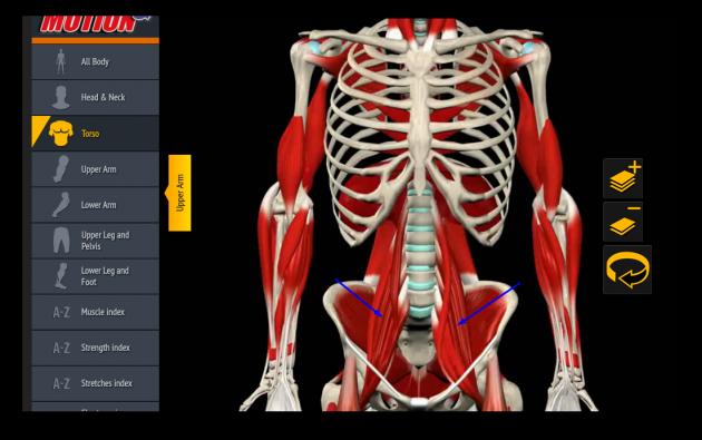 Растяжка подвздошно-поясничных мышц
