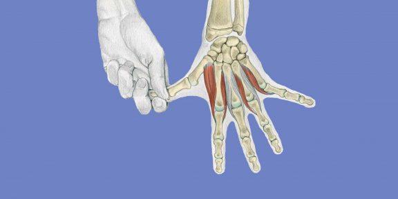 Анатомия стретчинга в картинках: упражнения для рук и ног