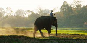 Необычный подход к созданию хороших привычек: направляйте всадника, мотивируйте слона и формируйте путь