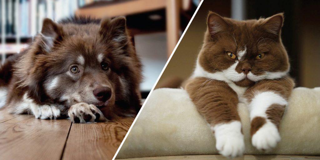 Каких животных можно держать в квартире