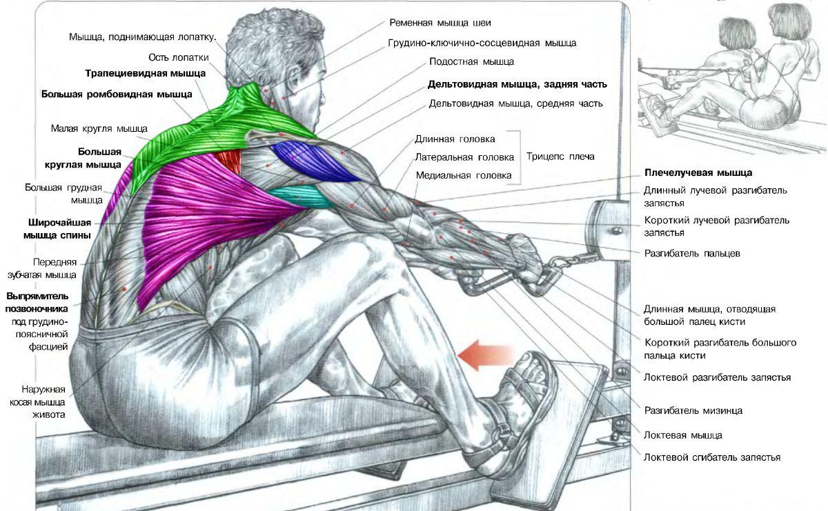 Схемы упражнений для мышц 100