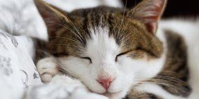 Как заставить себя рано ложиться спать