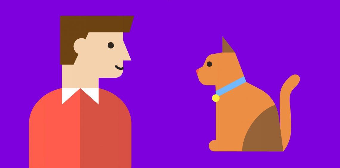 Как правильно заботиться о домашних кошках
