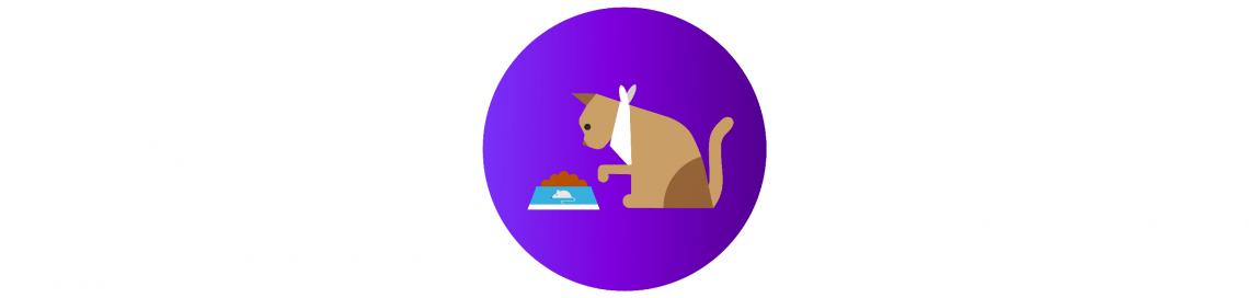 как ухаживать за кошкой: питание