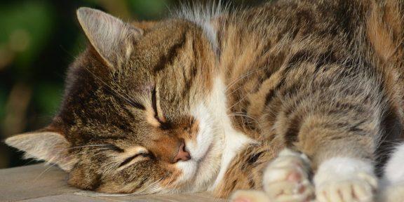 Приложение WakeMode поможет выспаться
