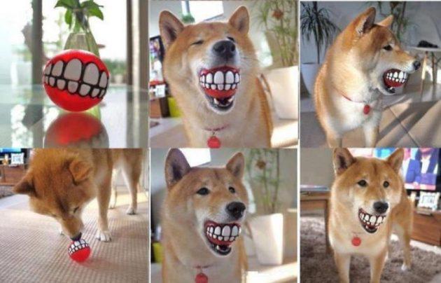 Мячик для собаки