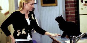 Как научиться понимать свою кошку
