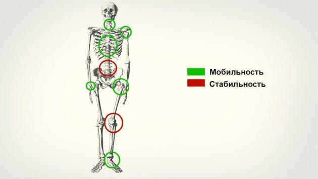 составить тренировку: мобильность суставов
