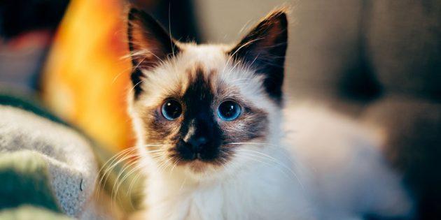 Сколько живут кошки: Как продолжительность жизни зависит от породы и наследственности