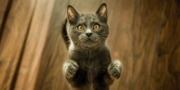 Сколько живут кошки: Как продлить жизнь любимца