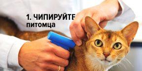 Как найти пропавшую кошку и никогда больше не потерять