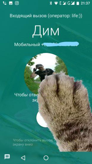 Google paw 2