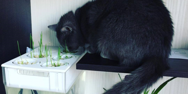 «Акваферма» — аквариум и огород