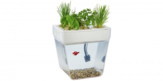 «Акваферма» — аквапоническая система