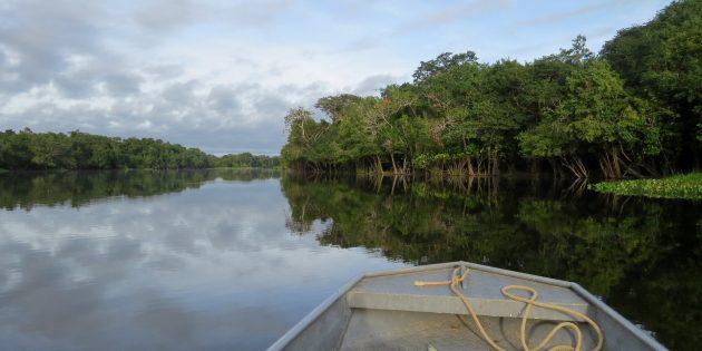 Леса Амазонки, Бразилия