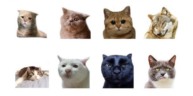 стикеры: Animal Photo Emoji