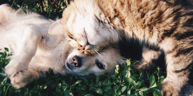 Сколько живут кошки: Не позволяйте кошке гулять без присмотра