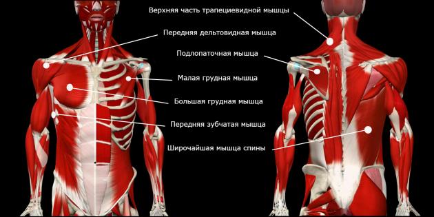 коррекция осанки: жёсткие мышцы