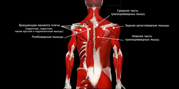 коррекция осанки: слабые мышцы