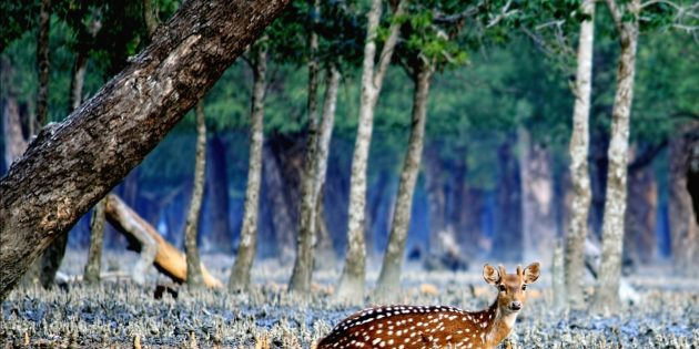 Сундарбан, Индия и Бангладеш