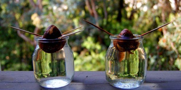 11 лайфхаков с авокадо