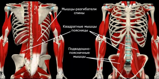 Жёсткие мышцы