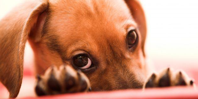 Как воспитать собаку: 15 правил, которые помогут вам стать вожаком