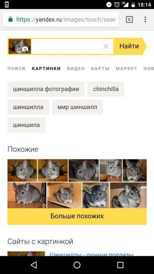 «Яндекс»: определение животного по картинке