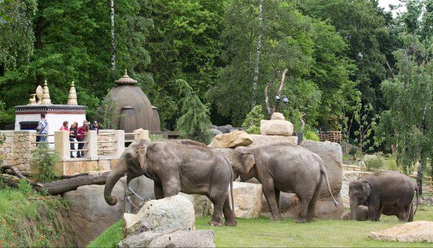 Что посмотреть в Праге: Пражский зоопарк